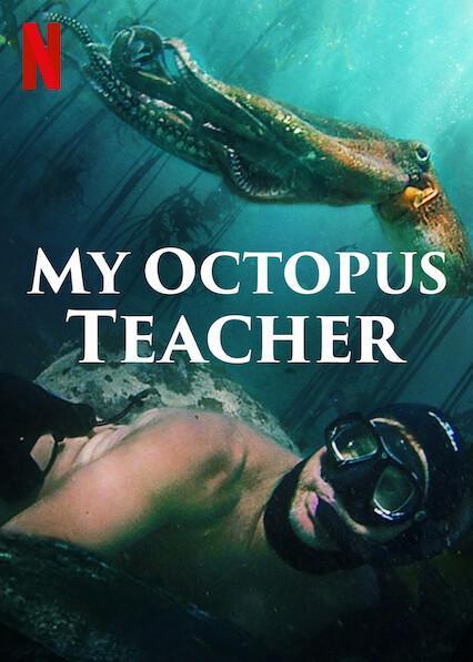 Documental My Octopus Teacher Lo Que El Pulpo Me Enseno Confined Rock